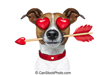 emoticon or Emoji crazy in love - jack russell terrier...