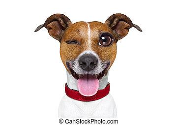 Emoticon, perro, mudo, tonto, o,  emoji