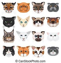 emoticons, ベクトル, 頭, アイコン, set., ネコ
