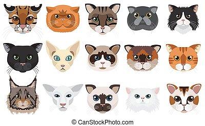 emoticons, têtes, set., illustration, vecteur, faces, chats
