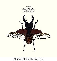 empate, bosquejo, mano, ciervo, vector., escarabajo