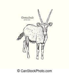 empate, gazella, gemsbok, bosquejo, mano, oryx, vector., o