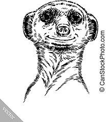 empate, grabar, meerkat, ilustración, tinta