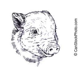 empate, ilustración, cerdo, cepillo, pintura de la tinta