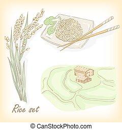 empate, spikelet, set., mano, arroz, campo, gachas de avena del arroz