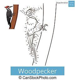 empate, vector, pájaro carpintero, pájaro, aprender