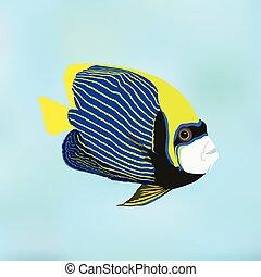 emperador, angelfish., pomacanthus, imperator., vector, ilustración, de, coral, fish.