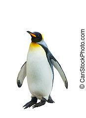 emperador, plano de fondo, aislado, penguins., blanco