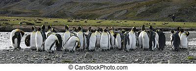 Emperor penguin in natural habitat