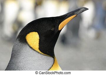 Emperor penguin in natural habitat, blured background