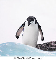 Emperor penguin on rocks near sea