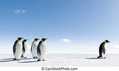 Emperor Penguin rejected by other Penguins