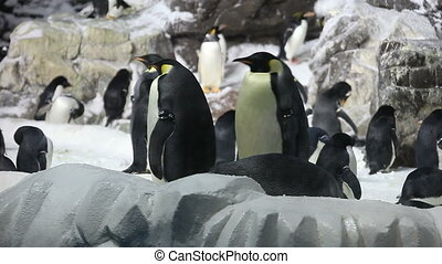 Emperor Penguins Hanging Out on the Ice