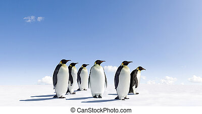 Penguins - Emperor Penguins in Antarctica