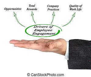 empleado, conductores, compromiso
