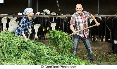 Employees working in livestock barn - Positive adult farm ...