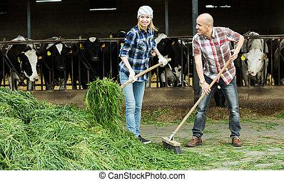 Employees working in livestock barn - Positive farm ...