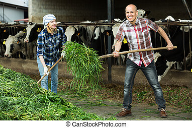 Employees working in livestock barn - Smiling farm employees...