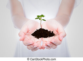 empresa / negocio, tenencia de la mano, verde, pequeño,...