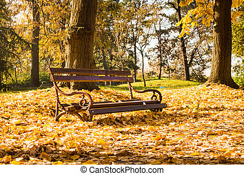 Empty bench in park covered in fallen leaves