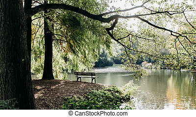 Empty bench on the shore of lake framed by trees with beautiful view of the lake's coast