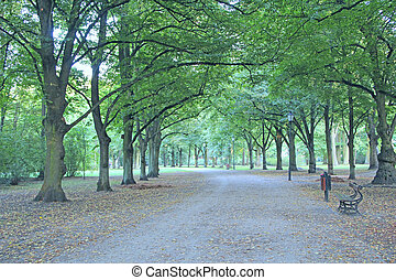 benches in beautiful park with many green trees