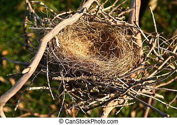 Empty Bird Nest With High DOF - Nest Outdoors Perfect to...