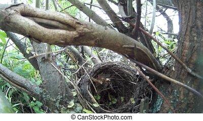 empty bird's nest on a tree, close-up, Ukraine.
