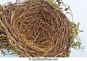 empty bird's nest - the empty nest of a bird. empty bird's...