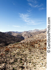 Empty but life - Swartberg Nature Reserve