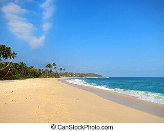 Empty clean beach with palms, Kamburugamuwa, Mirissa, Sri...