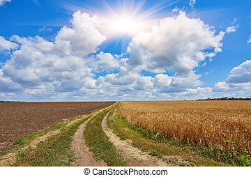 countryside road through fields with wheat