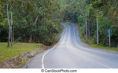 Empty curve road in the forest