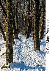footpath in winter forest - empty footpath in winter forest