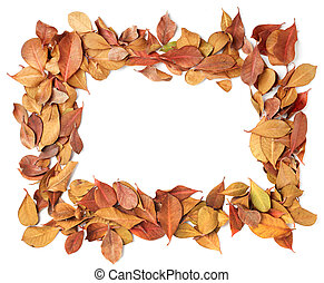 empty frame of dry leaves
