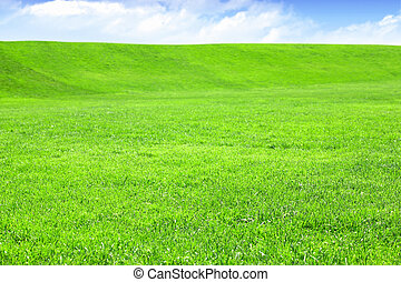 Empty grass field with blue sky