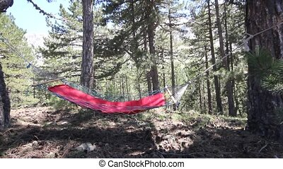 empty hammock in the forest