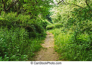 Empty Lane, Path, Pathway In Summer Deciduous Forest