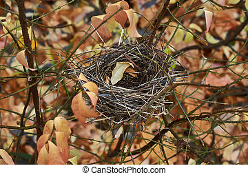 Empty nest of small birds in the  forest.