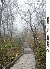 Empty old stairway in misty park. Serene depressed foggy landscape