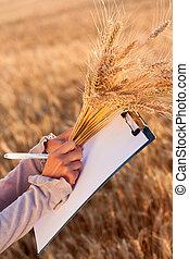 Empty paperwork, pen and golden ears wheat in women's hands