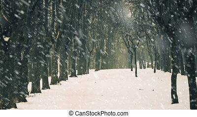 empty park alley under falling snow - empty park alley with...