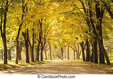 Empty park with fallen autumn leaves