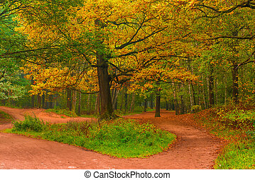 empty path in autumn forest at dawn