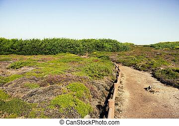 Empty path in rural landscape. Walkway in rocks with grass. Trail in the meadow.