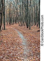 empty path through the forest