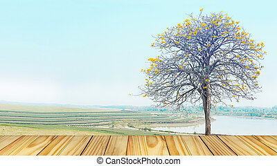 Empty perspective old wooden over on background yellow tree standing alone in meadow field, beautiful landscape in vintage tone