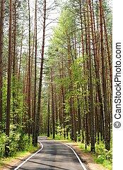 Empty road in pine forest in sunny summer day, Orlovskoye Polesie, Russia