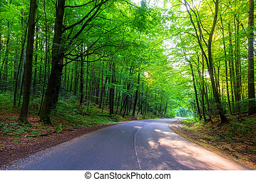 empty road in the forest on a summer day