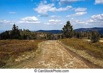 empty road in the mountains, Beskidy Mountains, Poland